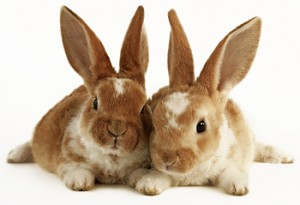 rabbits_together_350.jpg